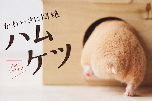 So Japan Has Become Obsessed With Hamster Butts Acclaim Magazine
